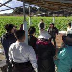 企業研修・農業体験・農福連携視察