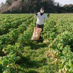 日常を非日常に 農業体験 やってみた!